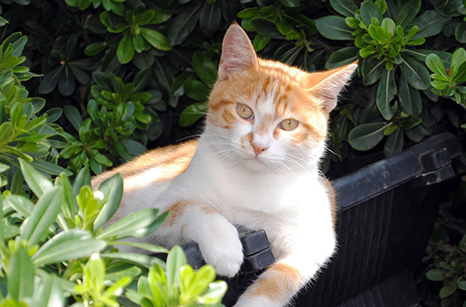 General Image - Cat Outside2